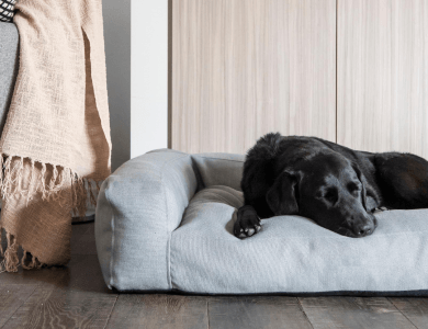 New Summer Pet Beds
